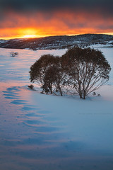 Fire And Ice || PERISHER || AUSTRALIA (rhyspope) Tags: australia aussie nsw new south wales perisher valley snow winter sunrise sunset ice cold travel amazing alpine ski snowboard rhys pope rhyspope canon 5d mkii trees morning adventure hiking snowy mountains