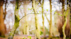HSS-1-3 (ianmiddleton1) Tags: trees spring leaves buds panorama hss sliderssunday