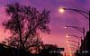 Sunrise throught tree w/Streetlights 20180422-2 (weslowik) Tags: 2018 streetlight esoteric