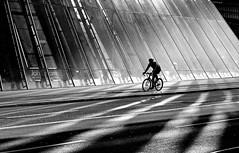 city cyclist (heinzkren) Tags: schwarzweis blackandwhite bw sw monochrome urban reflection spiegelung street streetphotography canon powershot backlight architektur architecture wien vienna lines shadow light sun sunlight sport bicycle glass glasshouse glas glashaus radweg mann man silhouette action
