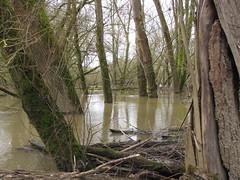 IMG_0914 (NICOB-) Tags: loire hiver nièvre bourgogne cher fleuve lumière arbres eau boisflottés embacles myennes mousse crue