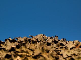 365.72 and 100x.16 - Lichen Landscape
