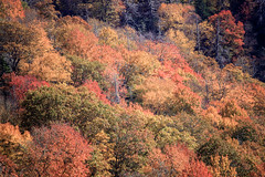 IMG_3736_Smoky Mountains (Alex Hsieh (椰子人)) Tags: ç´è² smokymountains smokymountainsnationalpark nationalpark 2016 fall fallfoliage autumn roadtrip travel tennessee northcarolina tn usa canon canon6d 6d