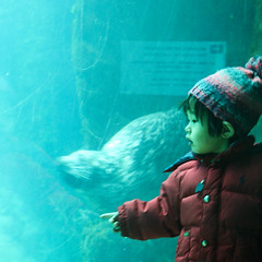 the child and th seal (Maluni) Tags: valencia spain espana spagna acquarium children bambini child water acqua