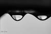 Tropfen (markus.bank) Tags: photo makro sw bilddestages photooftheday porz projekt365 köln 2018 instadaily lightroom tropfen canon picoftheday flickr wahnheide wassertropfen