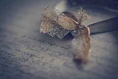 We are such stuff as dreams are made on (babs van beieren) Tags: decay hortensia flower shakespeare dust brown floralfriday 7dwf words poem letters ribbon closeup macro