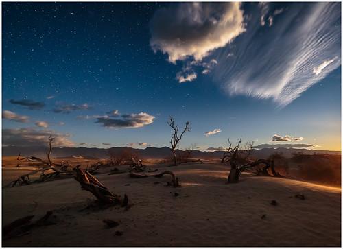35 - Mesquite Boneyard by Steve Ornberg