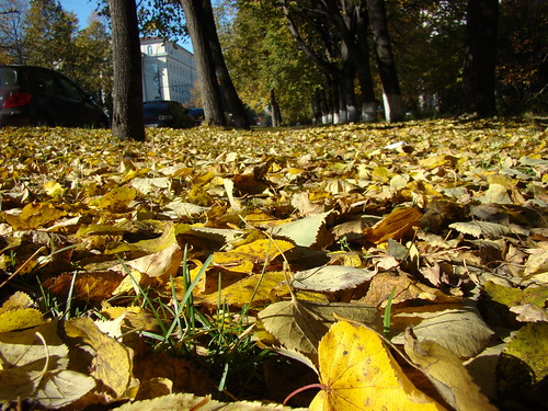 Листья на газоне ©  ayampolsky