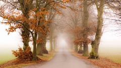 Into the unknown (odell_rd) Tags: fog sywellgrange avenue trees coth coth5 ngc npc