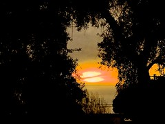 Disappearing Halo At Sunset (Chic Bee) Tags: sunset olivetrees tucson arizona halo