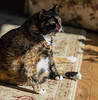 Isis Loves the Sunshine! (Donald.Gallagher) Tags: animals cats de delaware felines isis lenstagger mammals nature newcastlecounty northamerica pikecreek public tortoiseshell typecolor typelightroom typeportrait typeshutterbuttonfocus typetelephoto usa vertical winter woodcreek