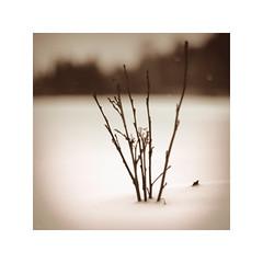 DM III (*TimeBeacon*) Tags: winter snow twigs branches dark melancholy monochrome