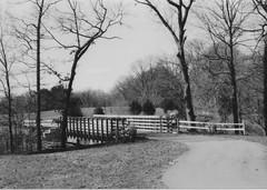 Crahen Valley Park (neukomment) Tags: bw blackwhite film 35mm hpenvy5530scanner canonsureshot85zoom michigan usa crahenvalleypark march 2018 ilfordhp5plus400bw bridge iso400 tones shades monochrome landscape trees filmphotography