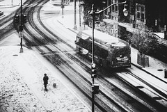 Still gotta walk the dog... (8230This&That) Tags: winter dc washingtondc snow snowstorm walkingthedog dog street metro bus x2bus streetscene