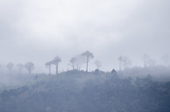 Mist (inma F) Tags: barranco colores montaña nube nublado paisaje mist fog island tenerife anaga chinamada canarias mountain tree arbol cloud niebla invierno frio cold gray silueta canaryisland