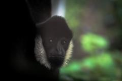 IMGP2879 (nathanmeade_) Tags: melbournewerribeezoo zoo animals tamron pentax k1 pentaxian pentaxk1 werribee melbourne zoos