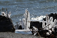 Spring Flowers? (Jan Nagalski (off for awhile)) Tags: ice iceformations spring water spray splash cold wintryspring lake waves lakestclairmetropark jannagalski jannagal