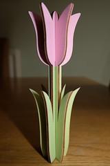 Wooden Tulip (Xerones) Tags: pink plywood xc1545 flash march2018 card tulip fujifilm