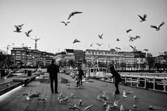 Hamburg (wolfgang.brinken) Tags: germany hamburg schwarzweiss blackwhite deutschland möwen birds wolfgang brinken