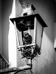 Ma maison (joboss83) Tags: pigeon oiseau rue bird var fujixt1 maison lampadaire