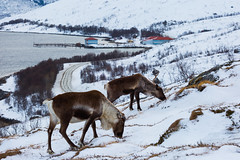 IMG_8777 (tomikaro) Tags: tromsø wintrer auroraborealis aurora trip landscape northern enjoythearctic arctic norway