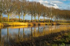 Sur les rives de l'Escaut (musette thierry) Tags: obigies musette lescaut fleuve thierry d600 nikon 50mm18 promenade balade couleur printemps mars march ciel reflex reflets jaune