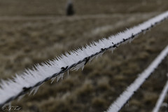 Barbed (Terri Toll) Tags: fence colorado d80 frost happyfencefriday hff nikon nikond850 rural winter