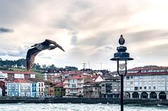 Gaviotas en Luanco (ccc.39) Tags: asturias luanco pueblo villa mar cantábrico agua costa gaviotas vuelo fachada coast shore village sea