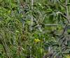 20180407-0I7A9352 (siddharthx) Tags: achampet bird birdwatching birdsofindia birdsoftelangana canon canon7dmkii closerange dawn dawnsunriseumamaheshwaram ef100400f4556isii goldenhour portraiture sunrise telangana umamaheshwaramtemple umamaheshwaram india in whitebrowedbulbul bulbul nature nallamallaforest ef100400mmf4556lisiiusm tree wood animal