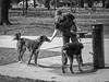 Trust (piano62) Tags: dogs dogrescue trust mansbestfriend innocence thirsty kindness gentle beauty understanding blackandwhite monochrome nikond750 nikon70200f28vr