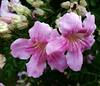 20180401_160906 (jagar41_ Juan Antonio) Tags: flores flor flora