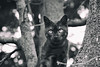 Happy Caturday! (Monica Muzzioli) Tags: cat tree bw blackandwhite animal pet kitty monochromatic monochrome mono