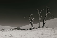 Deadvlei, Namib-Naukluft National Park, Namibia (Jean-Marc Vogel Photography) Tags: nb noiretblanc noir blanc nero blanco schwarz weiss black white bw blackandwhite deadvlei namibia namibie naukluft national park tree arbres morts désolation climat climate changing réchauffement climatique temperatures désert desert