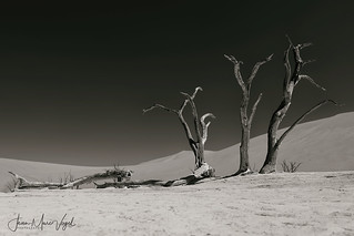 Deadvlei, Namib-Naukluft National Park, Namibia
