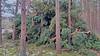 20180331_172316 (wos---art) Tags: bildschichten schneebruch sturmbruch äste bäume aufräumen haufen