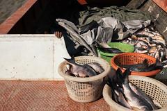 Myanmar 2014 (g.c.holland) Tags: myanmar burma yangon street scene fish fishing boat