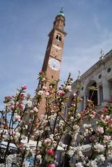 Flower market (Insher) Tags: veneto vicenza basilica flower market italy italia