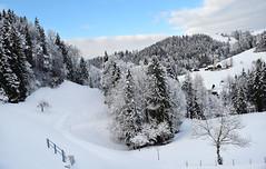 Dreaming of spring_Frozen woodland landscape_Switzerland_171217_01 (DS 90008) Tags: trees woodland landscape winter switzerland
