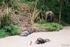Having a Bath (D. R. Hill Photography) Tags: thailand asia southeastasia thai elephant animal sanctuary phuketelephantsanctuary elephants travel phuket jungle nikon nikonfe2 fe2 helios helioslens helios81h mchelios81h50mmf2 50mm primelens fixedfocallength manualfocus russianlens film analog 135 35mmfilm fuji fujifilm fujipro400h pro400h nature wildlife