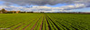 New Crop After the Storm (CarlosDominguez812) Tags: oxnard california unitedstates us field lines crops wide angle wideangle southerncalifornia clouds landscape green rows photography canonef1740mmf4lusm canoneos6d agriculture