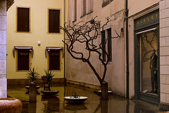 DSC01478_3 (gaetanovalentini) Tags: padova padua veneto venetissimo sony a7 street square piazzetta rain rainy day pioggia riflessi
