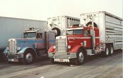 Peterbilt(s): Bar H (PAcarhauler) Tags: pete peterbilt semi tractor trailer truck livestock