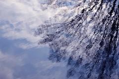 Tükörkép (vegeta25) Tags: tree fa reflection reflections tükröződés víz water sky clouds cloud cloudy felhők felhő felhős
