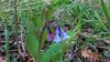 may 2014 lake katherine (timp37) Tags: flowers may 2014 illinois palos lake katherine