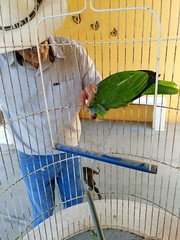 My father and his parrot. (yaotl_altan) Tags: perico parrot perroquet papagei pappagallo попуга́й papagaio mèxic méxico mexiko ме́ксика messico mexico mexique