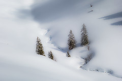 Snow in Chartreuse (vegard.magnus) Tags: tree moutains snow white alpes alps grenoble chartreuse sappey charmant som sony rx100 winter hiver