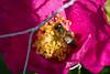 IMG_7670 (Lightcatcher66) Tags: blütenundpflanzen florafauna makros lightcatcher66