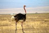 IMG_3030 (SusanKurilla) Tags: wildlife africa kenya tanzania wild safari adventure