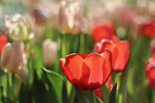 Shouting Spring