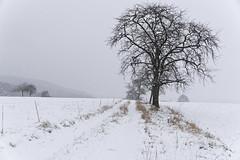 C'était l'hiver (Excalibur67) Tags: nikon d750 sigma globalvision 24105f4dgoshsma paysage landscape hiver winter nature neige snow arbres trees